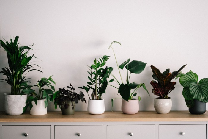 The benefits of plants for creating positive work environments